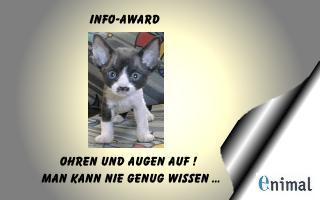 enimal_infoaward-deutsche Tierheime: Ich denke mit